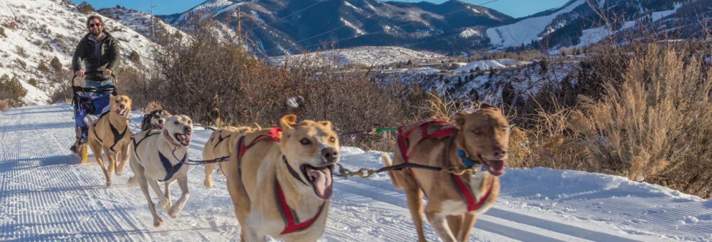 Dog Sledding in Aspen Snowmass