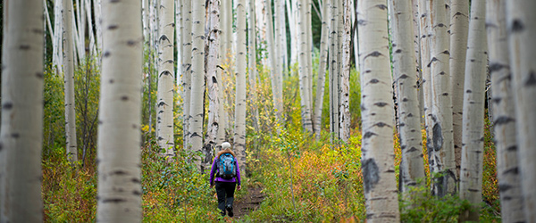 Lost Forest at Snowmass