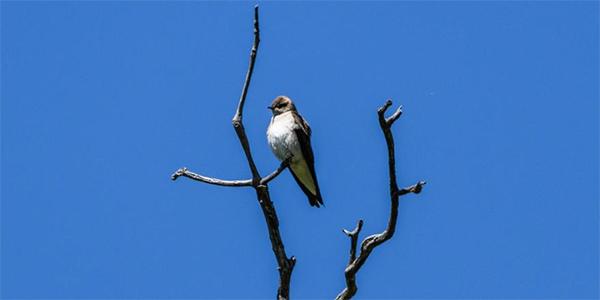 Birding at Aspen Center for Environmental Studies