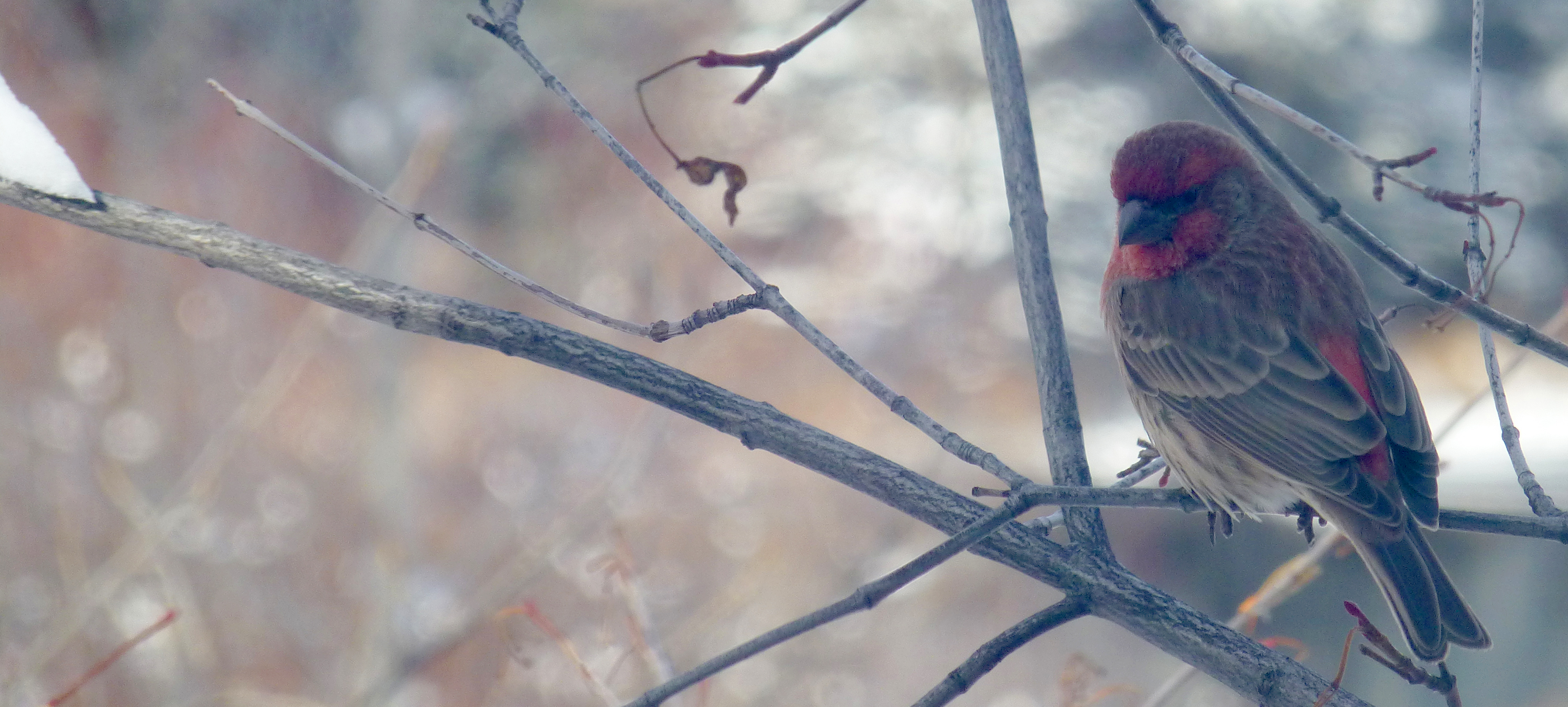 birding with ACES in Aspen in the spring